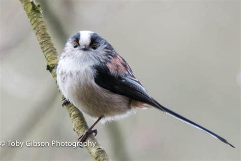 How To Keep Birds Patio by Uk Garden Birds Beara Creative