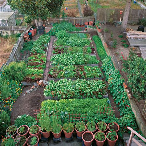 backyard farming a mini farm in san francisco vegetable gardener