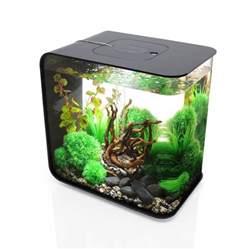biorb aquarium biorb flow aquarium the green