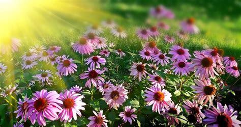 pflanzen die keine sonne brauchen 187 welche balkonpflanzen vertragen viel sonne