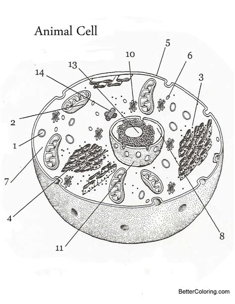 animal cell coloring pages sketch  printable