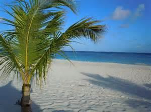 Aruba Tiki Huts Palm Eagle Pictures Traveler Photos Of Palm