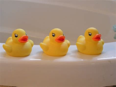 rubber duck bathtub free photo rubber duckies yellow ducky free image on