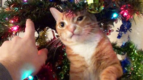 it s december do you have a cat in your christmas tree