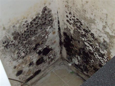 types of basement mold new york state mold summer update