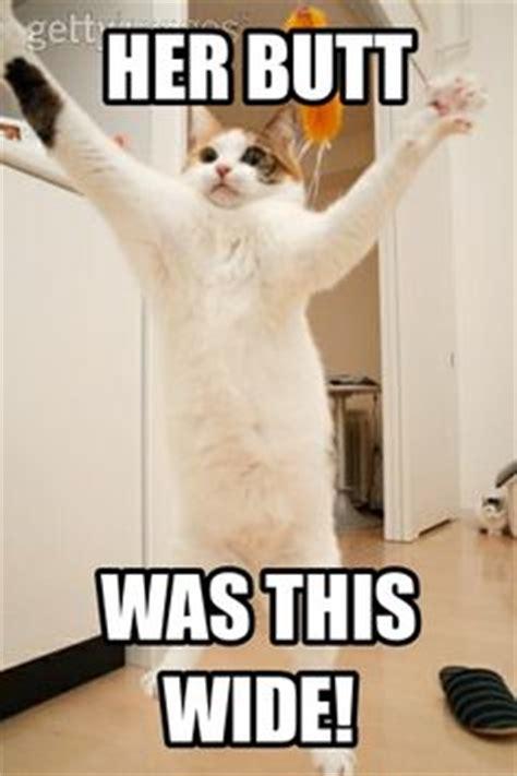 Butt Meme - 1000 images about cat memes on pinterest cat memes