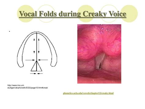 exle of vocal fry ppt voicing phonation powerpoint presentation id 1290692