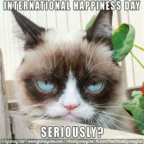 Best Angry Cat Meme - 368 best images about grumpy cat on pinterest angry cat