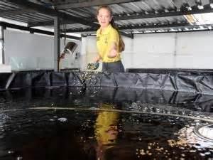 backyard catfish farming best 25 catfish farming ideas on pinterest tilapia fish farming aquaponics and