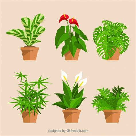 plants vectors   psd files