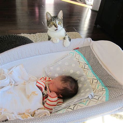 cat wallpaper reddit reddit user forgets to tell cat about new baby hilarity