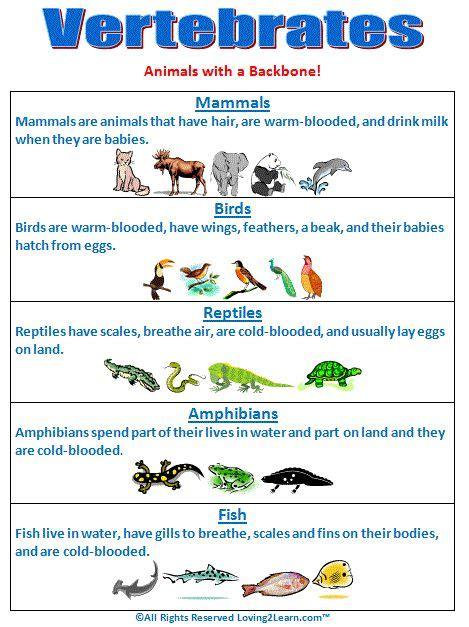 printable animal groups vertebrates chart www loving2learn com teaching science