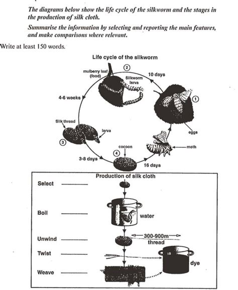 A Place For Ielts Tea Process by The Diagrams Below Show The Cycle Of The Silkworm And The Stages In The Production Of Silk
