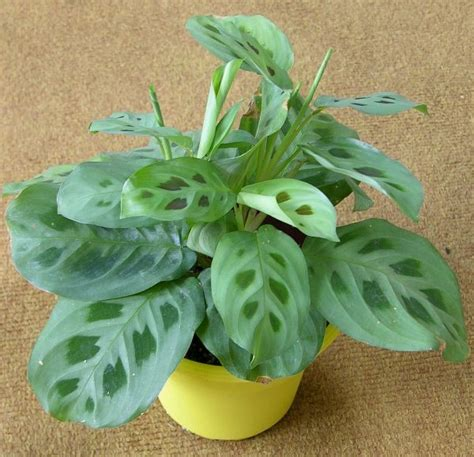 indoor plants indirect sunlight pin by gabriele bell on garden shed house plants tips