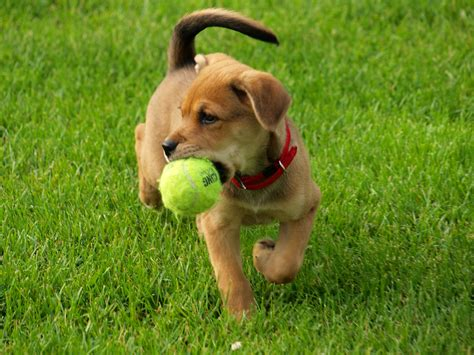 where can i go to play with puppies your to fetch a catch can be best crates and beds