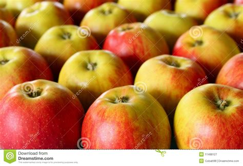 a lot of apples royalty free stock photography image 11488127