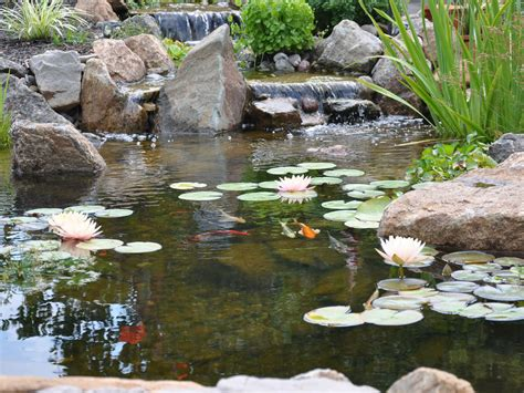 is a backyard pond an ecosystem pond ecosystem