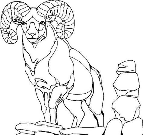 mountain sheep coloring page 100 best images about coloring pages on pinterest best