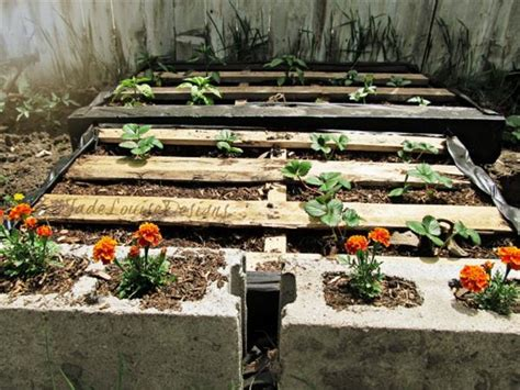 make your own pallet vegetable garden pallets designs