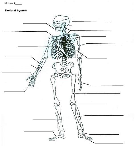 system diagram skeletal system diagrams diagram site