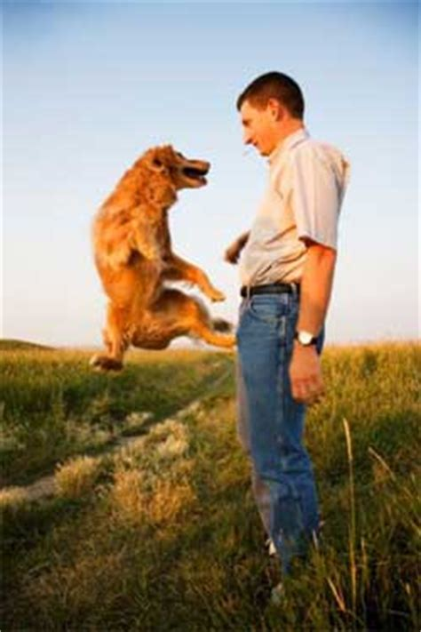 how to your to stop jumping up how to stop your from jumping up on and other dogs breeds picture