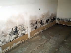 mold in the basement basement systems
