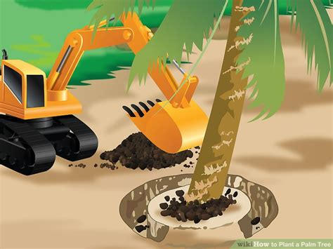 planting fan palm trees how to plant a palm tree 15 steps with pictures wikihow