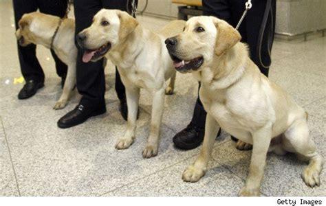 cloning dogs cloning