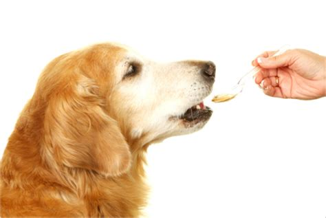 pet meds for dogs is it safe to buy pet meds