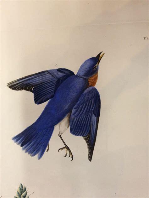 art in cambridge audubon s birds of america in the