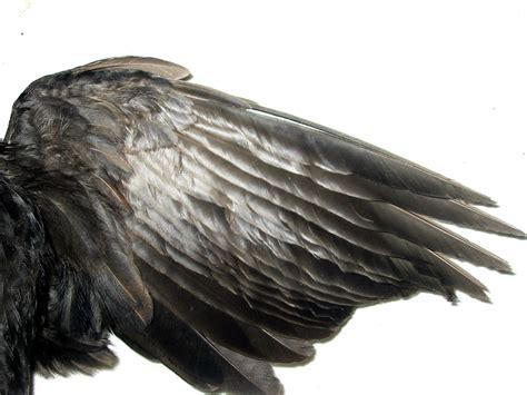 wing black drawings of wings png 400 215 324 wings