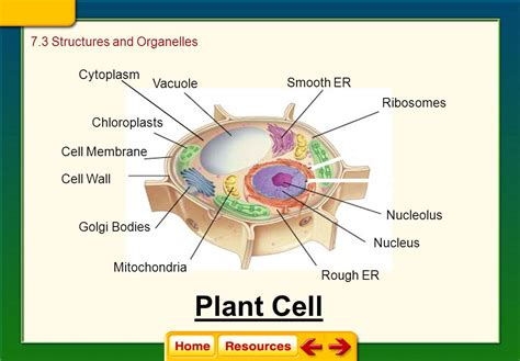 cell structure and function section 5 3 7 3 cell structures organelles ppt video online download