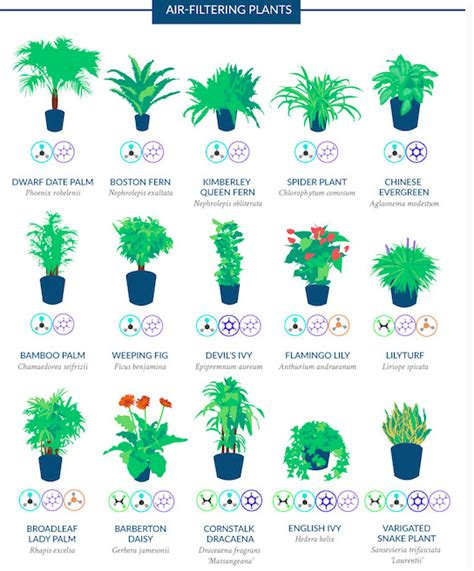 187 breathe easier at work with these top air purifying plants