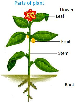 roots the most important part of your plant grow easy how plants grow and change big plants leaves prepare food for the plant