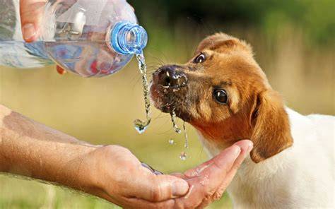 how to tell if your is dehydrated uncategorized archives aid for pets