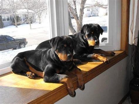 stop  dog  jumping   furniture
