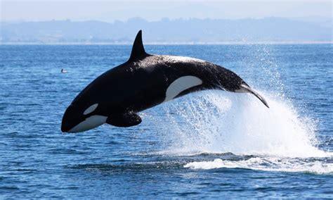 imagenes sorprendentes de ballenas taxonom 237 a de las ballenas