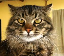 File:Gato irritado.jpg - Wikimedia Commons Gato