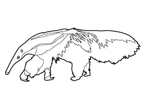 Anteater Coloring Page by Clip Anteater Coloring Page Abcteach