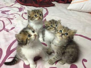 Jual Kursi Roda Untuk Kucing jadilah diri sendiri anak kucing parsi untuk di jual oktober 2012