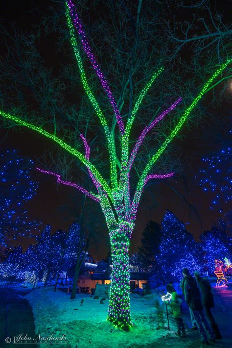 zoo light zoo lights at the denver zoo photos