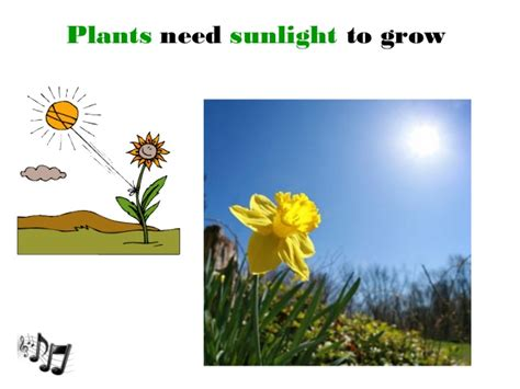 plants that do not need much sunlight plants that do not need much sunlight unit 7 plants
