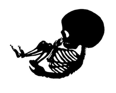printable baby skeleton iron on a heroic journey hopefully maybe we ll see