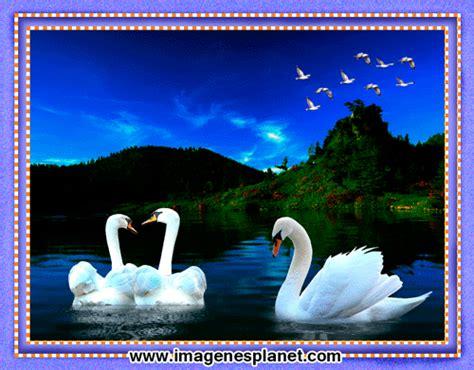 imagenes bonitas de buenas noches gif buenas noches dulces sue 241 os hasta ma 241 ana imagenes bonitas