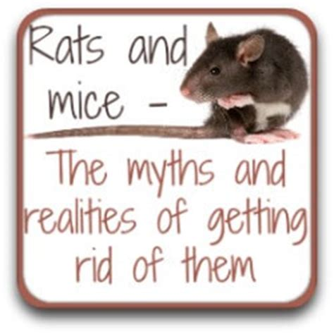 rat poison is it safe to use in your chicken coop