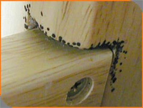 where do bed bugs hide in couches anticimex bedwantsenplaag herkennen in slaapkamer