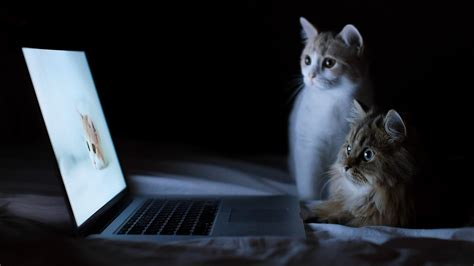 cat wallpaper macbook 1366x768 cats and macbook desktop pc and mac wallpaper