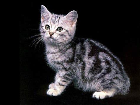 imagenes wallpapers gatos wallpaper de gatos super post taringa