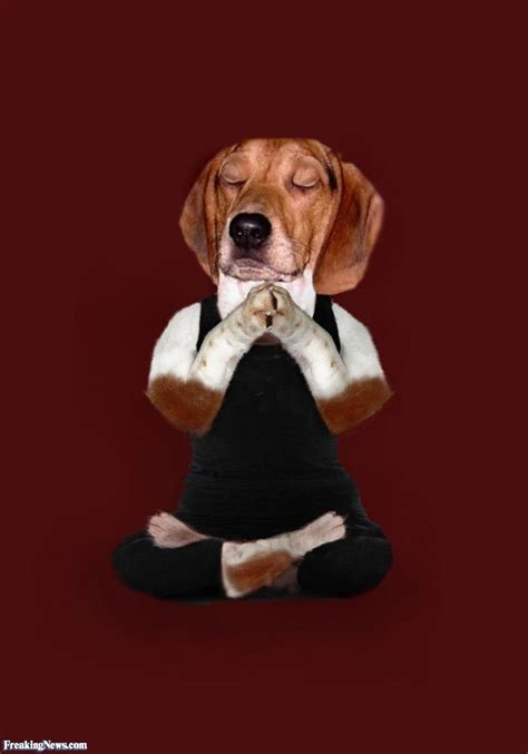 meditating dog pictures freaking news