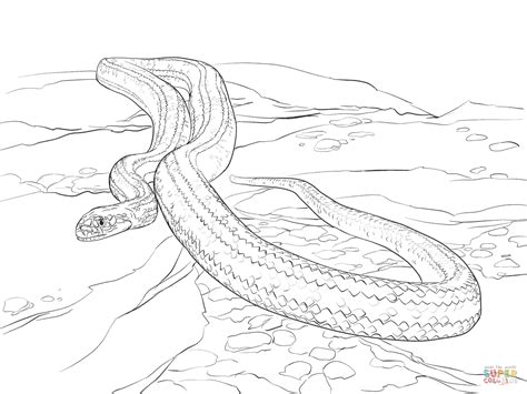 corn snake coloring sheets coloring pages